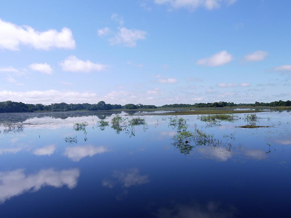 Gran Pantanal