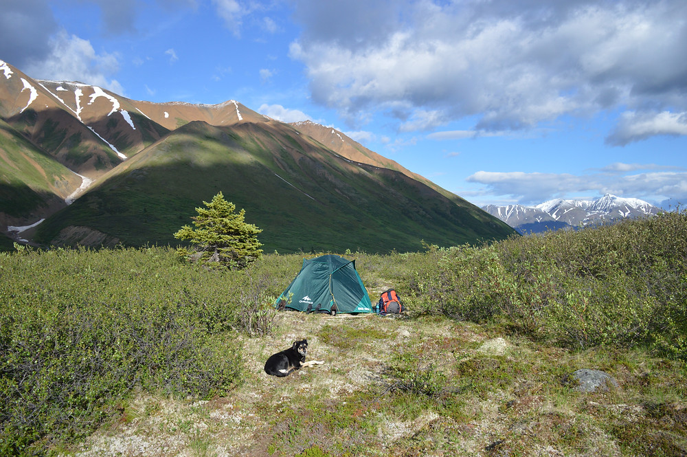 Camping Kluane National Park