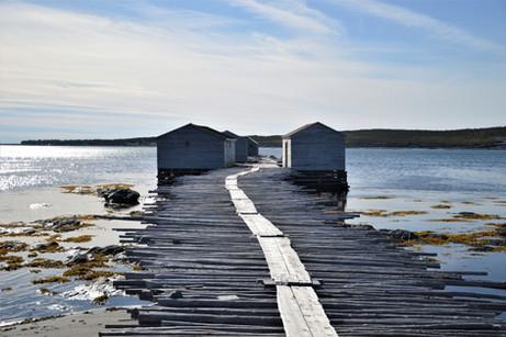 Newfoundland (Terranova), itinerario