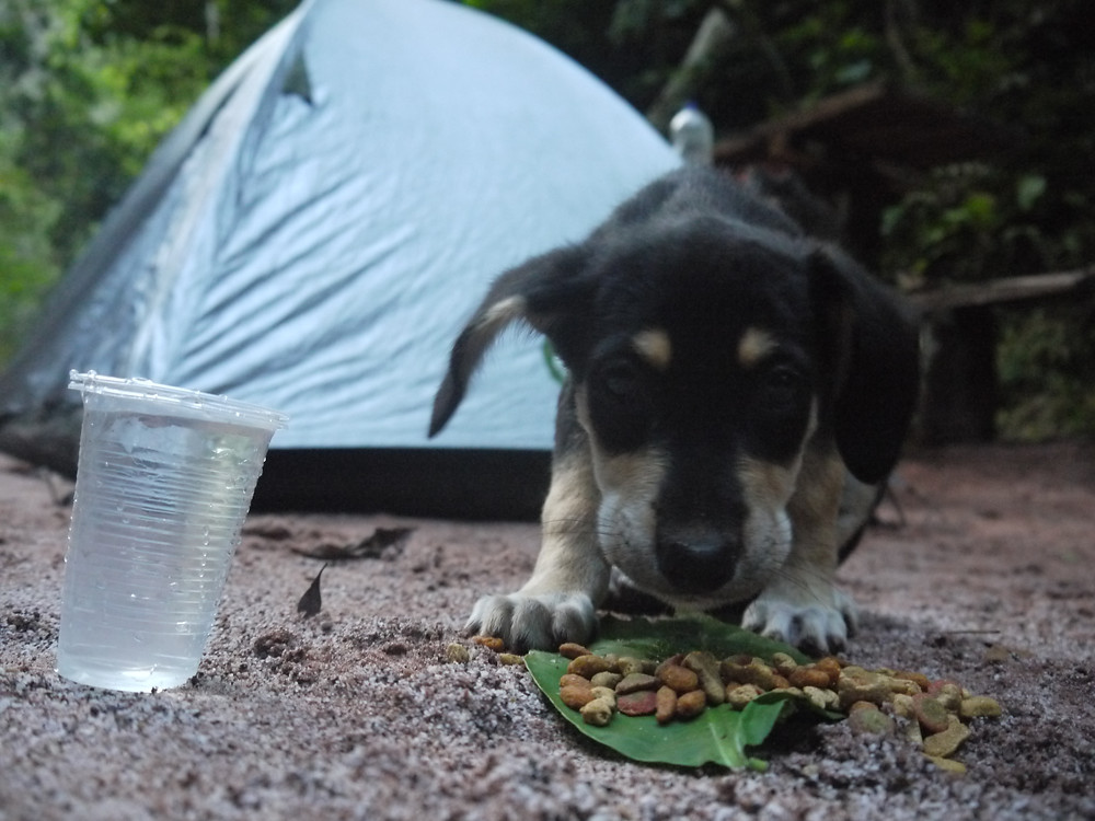 Jungle wild camping