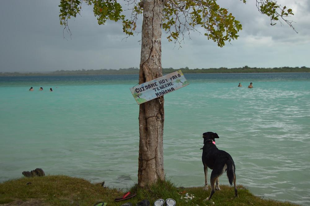 Prevenir que tu perro se pierda