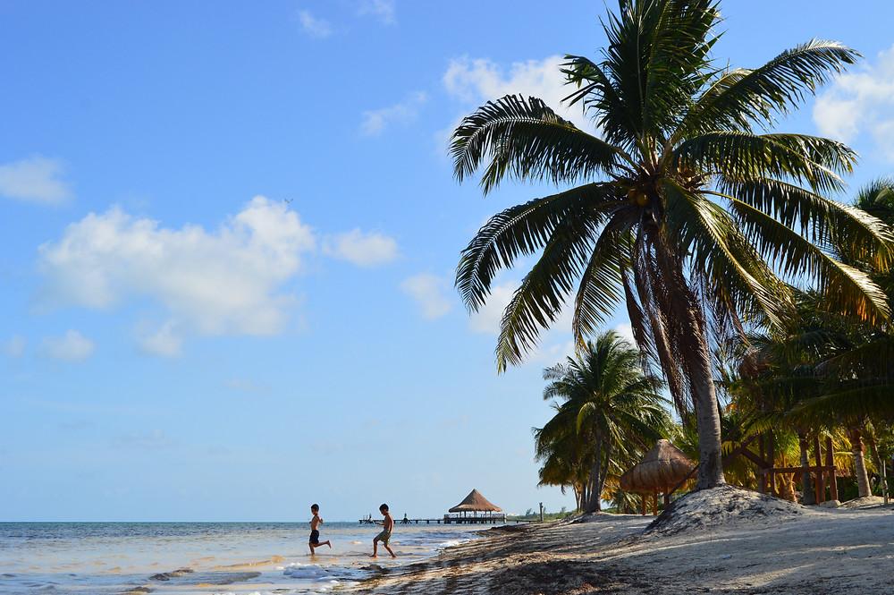 Caribbean beaches Cancun dog friendly