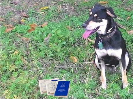 Dog documentation