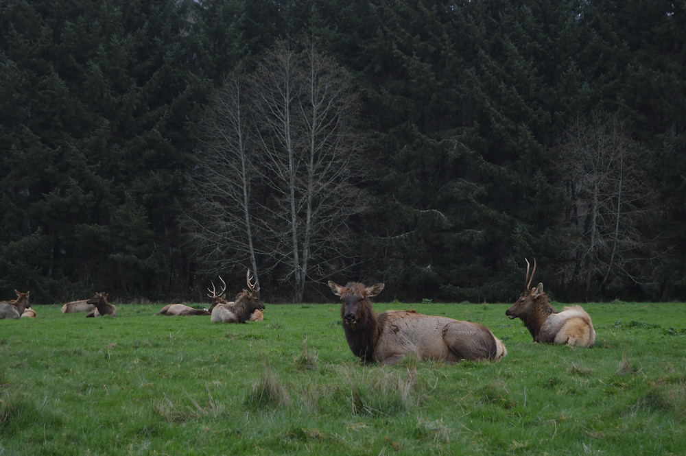 Elk redwood Parks California