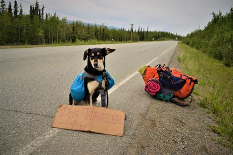 Viajar a dedo con perro