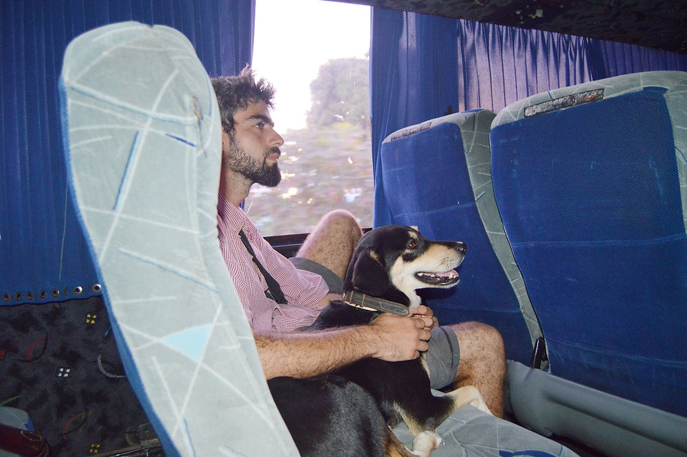 Travel dog by bus