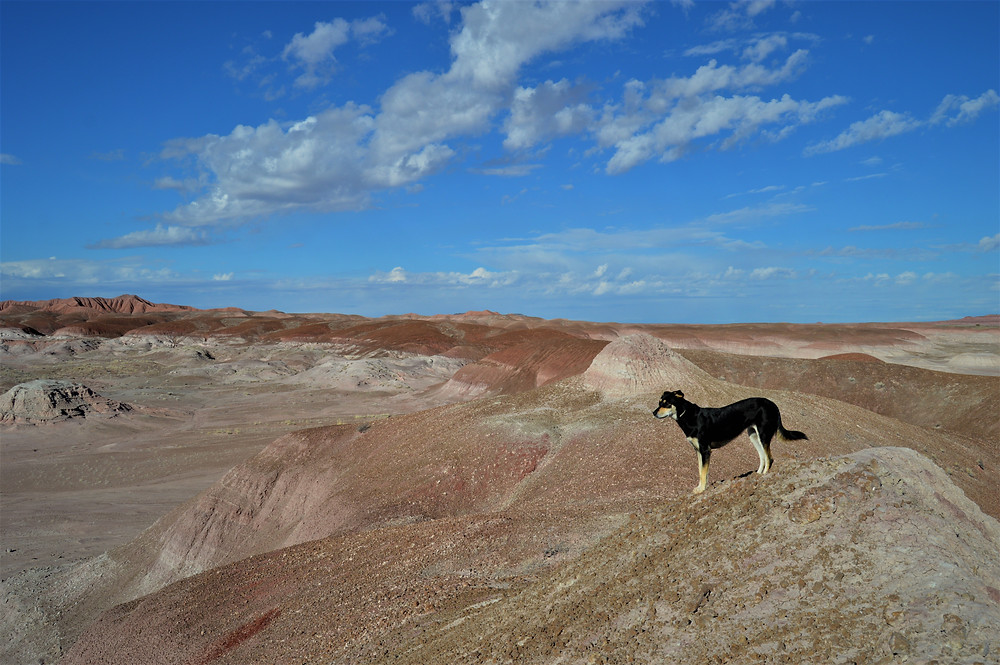Petrified Forest NP, Arizona with your dog