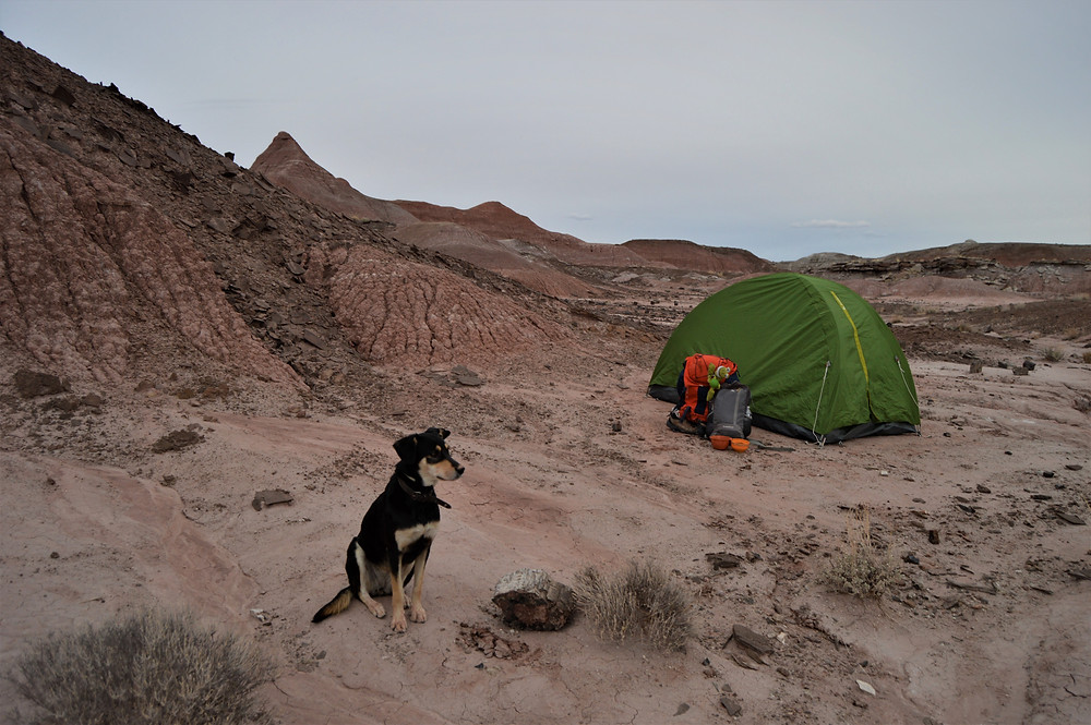 Wild camping Painted Desert with dog