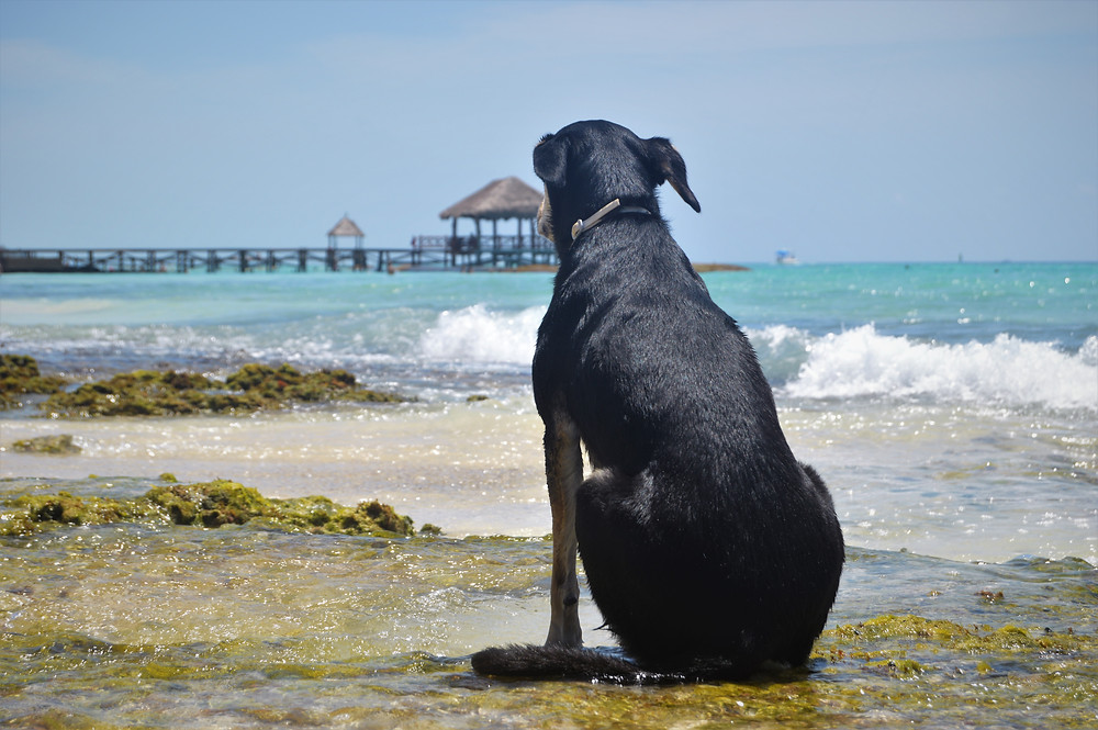 Caribbean Mexico with dog