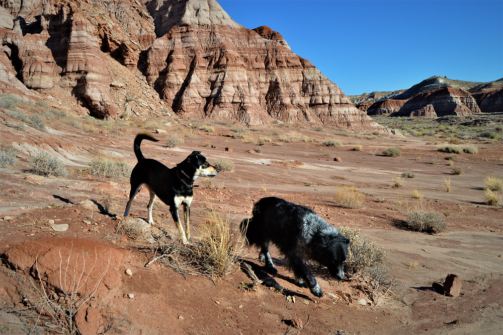 Grand Staircase-Escalante National Monument, Utah with my dog