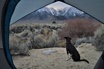 Why travel with a tent being a dog traveler