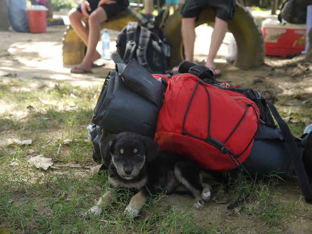 I am a backpacker dog