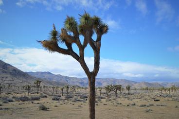 California, itinerario: el estado dorado