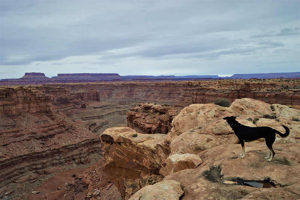 Canyonlands NP, Utah with my dog