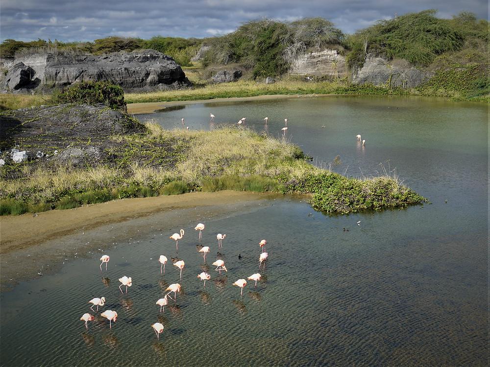 Flamingos Isabela Galapagos