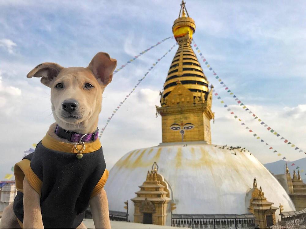 Viajar con perro TRAVELING CHAPATI