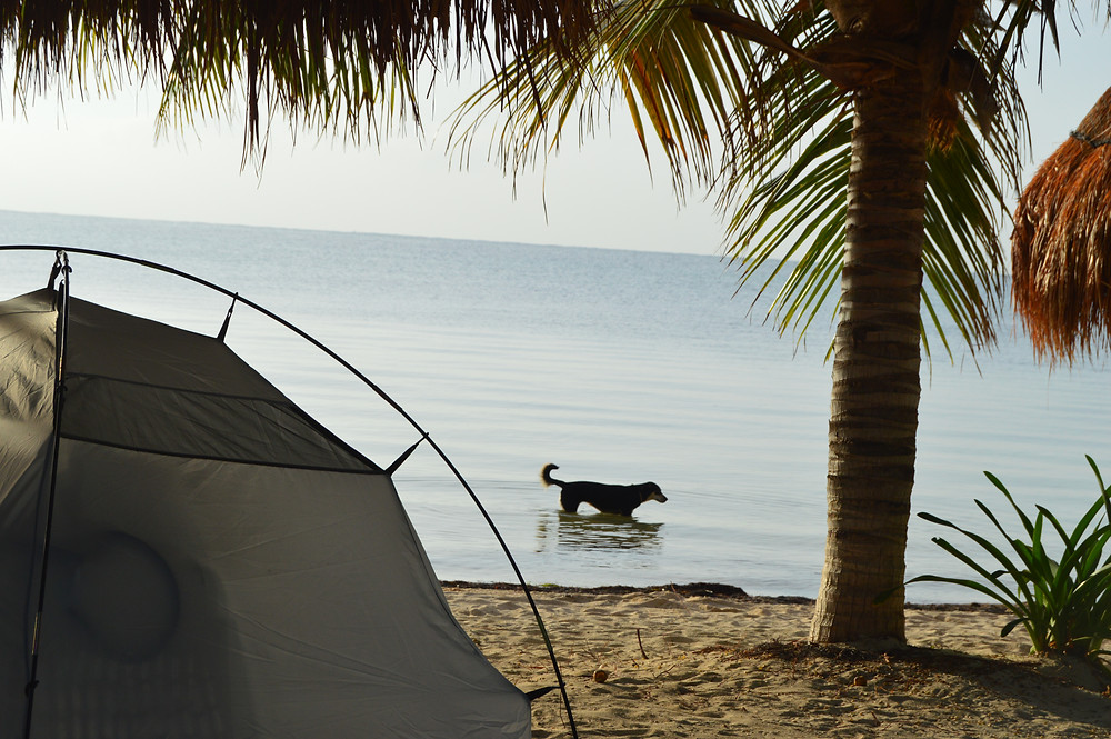 Cancun with my dog