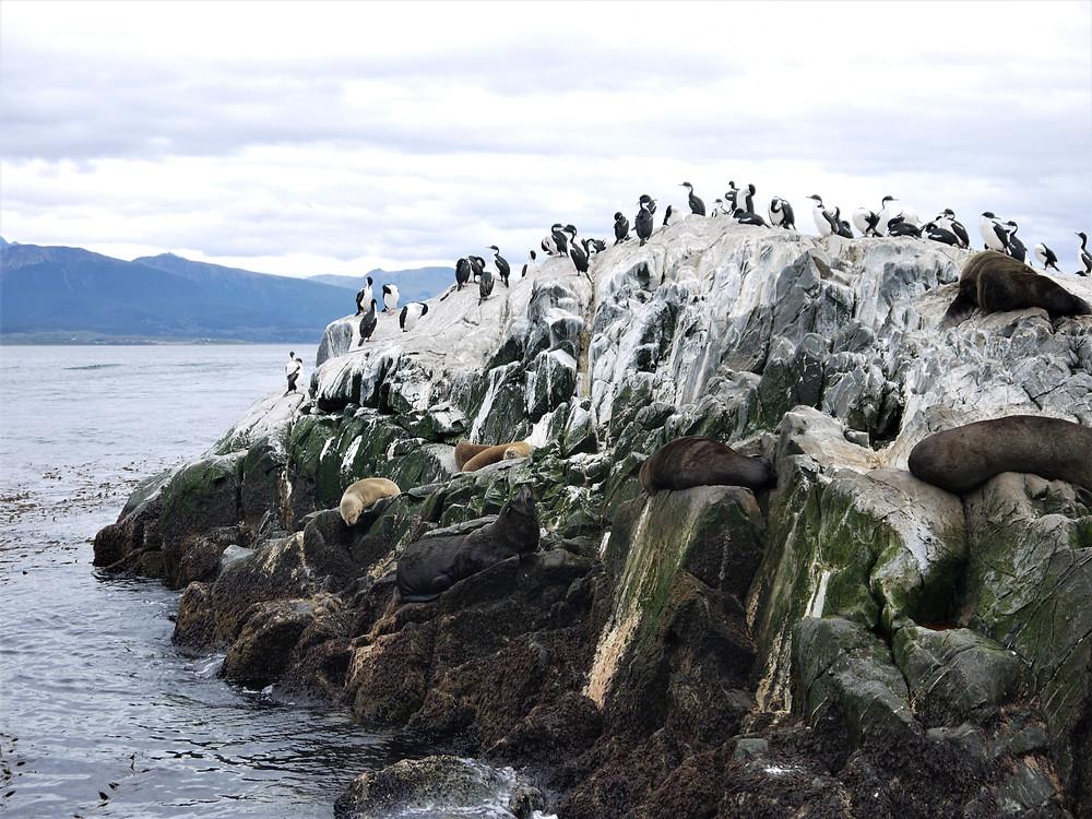 Ushuaia cormoranes y lobos marinos