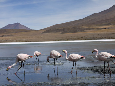 Bolivia andina, itinerario