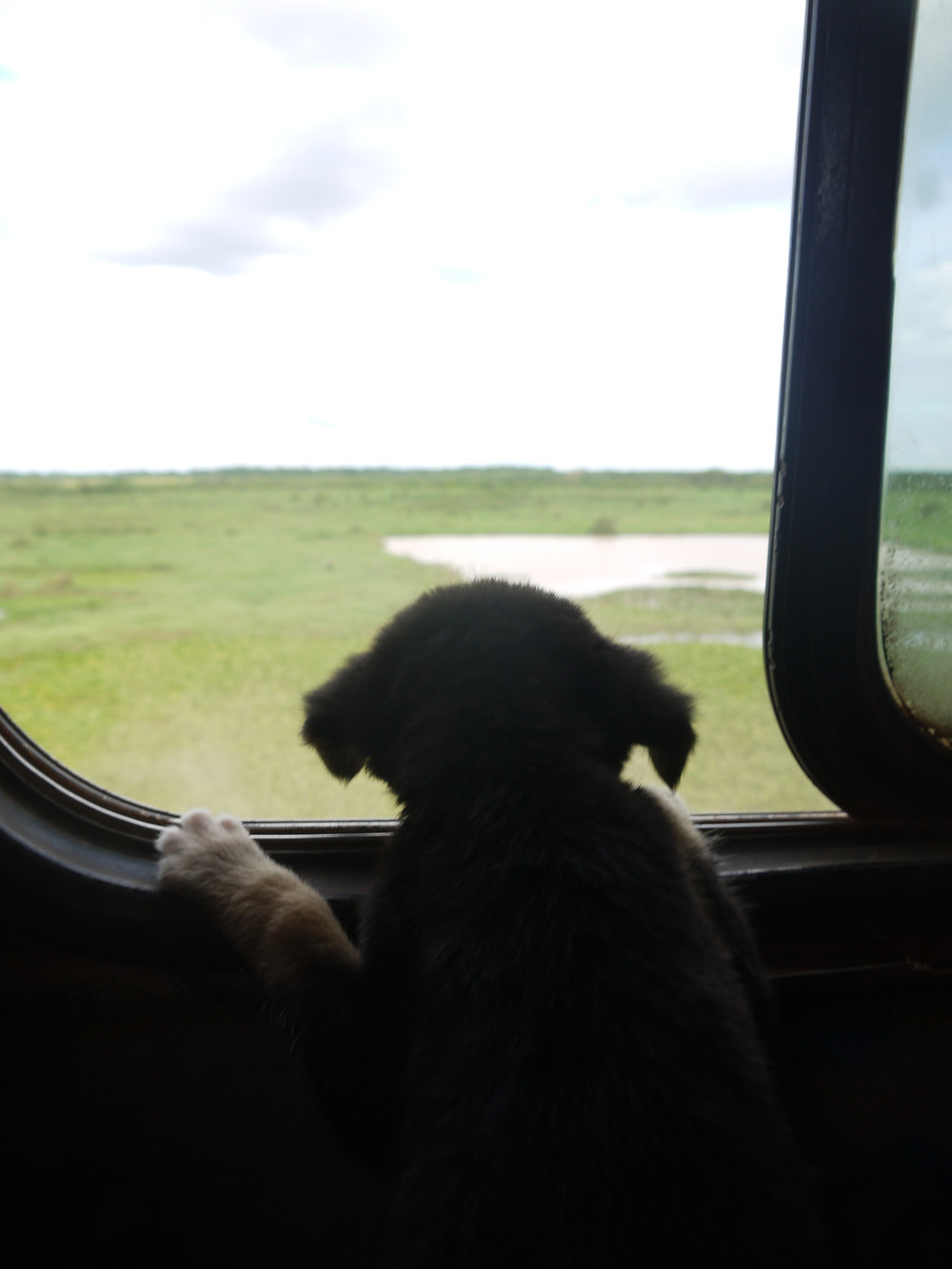 Traveling with dog Bolivia by bus