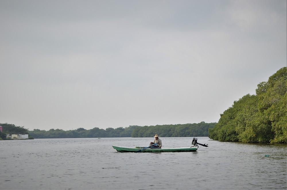 Mangrove Casitas Veracruz