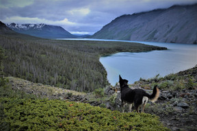 6 spectacular hikes in Canada to do with your dog