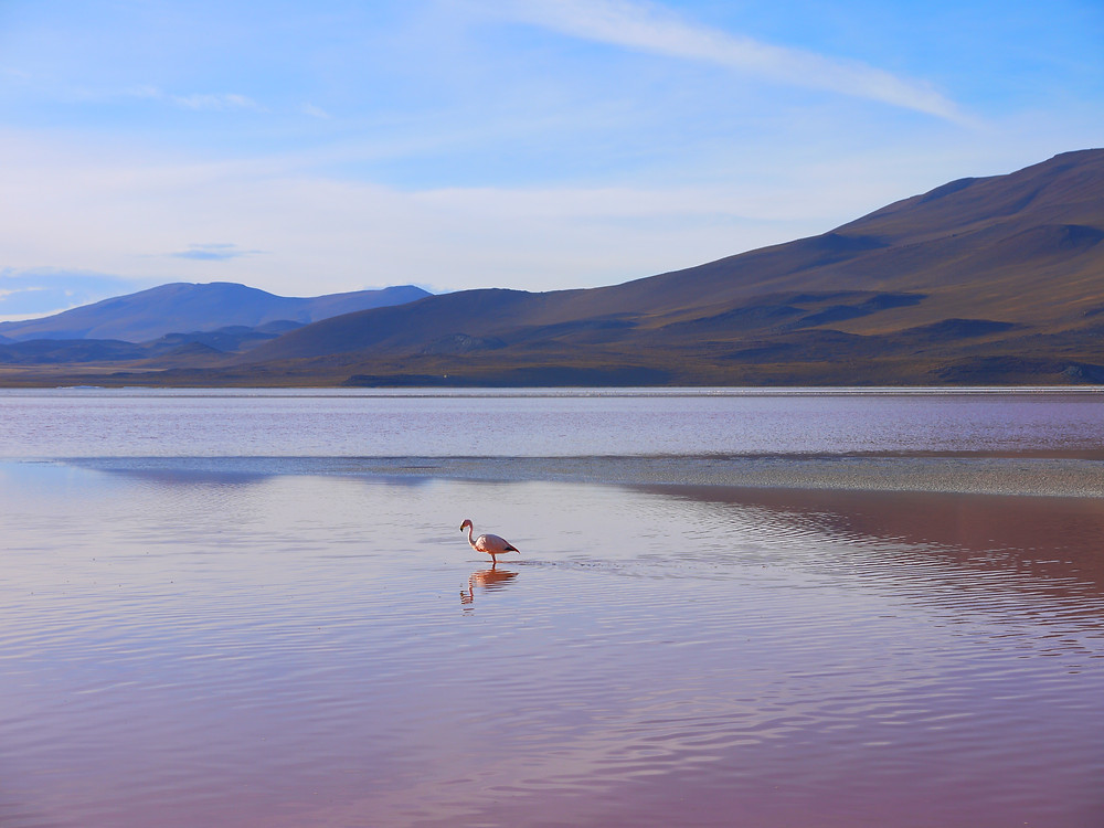 Salar de Uyuni and Eduardo Avaroa National Reserve