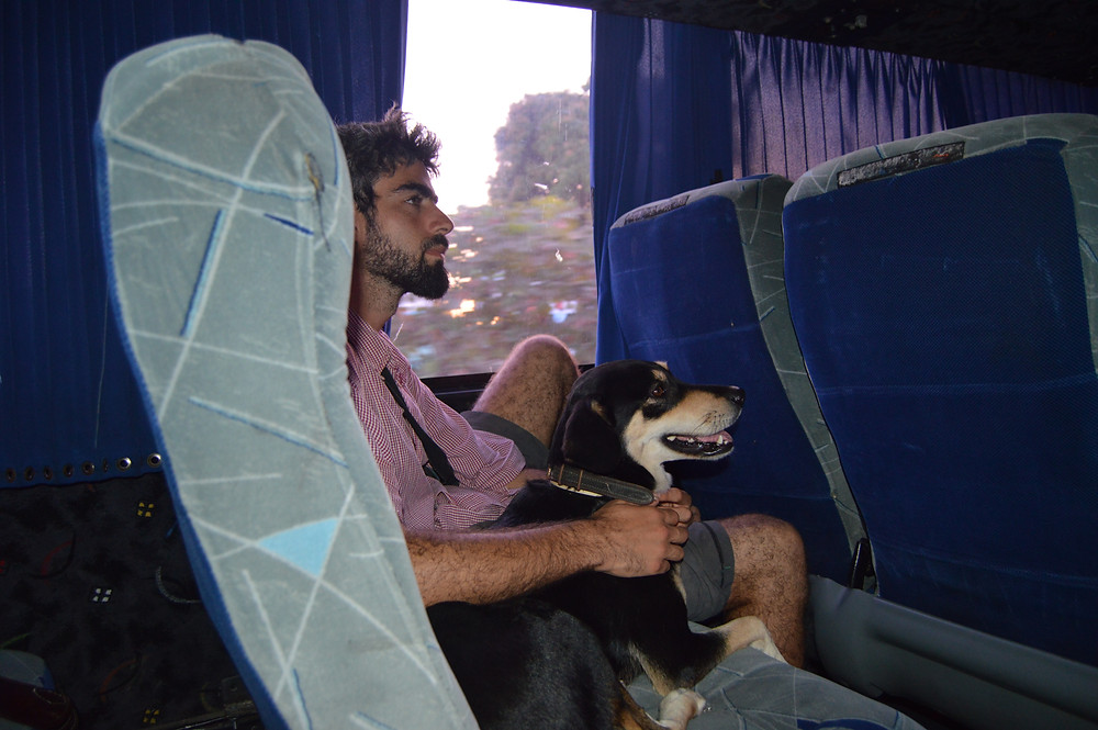 Traveling by bus with a dog