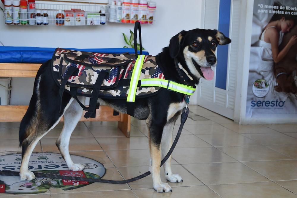 Dog saddle bags