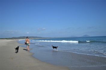 Viajar con perro en México