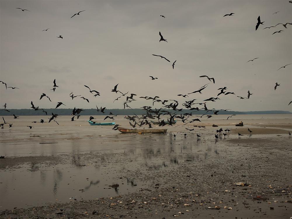 San Lorenzo y Reserva Ecológica Manglares Cayapas Mataje