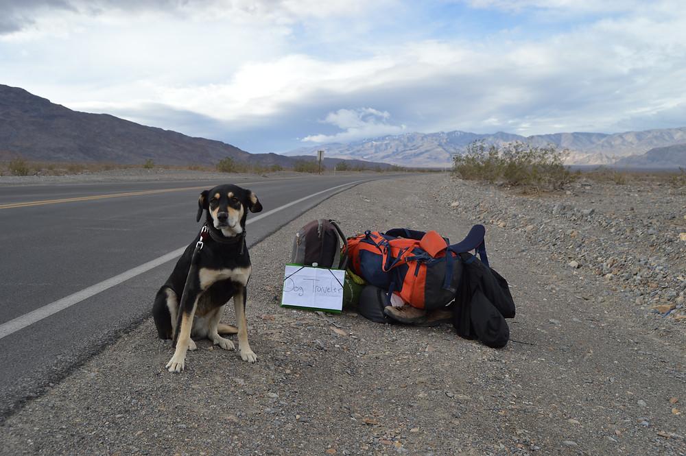 Autostop con perro California