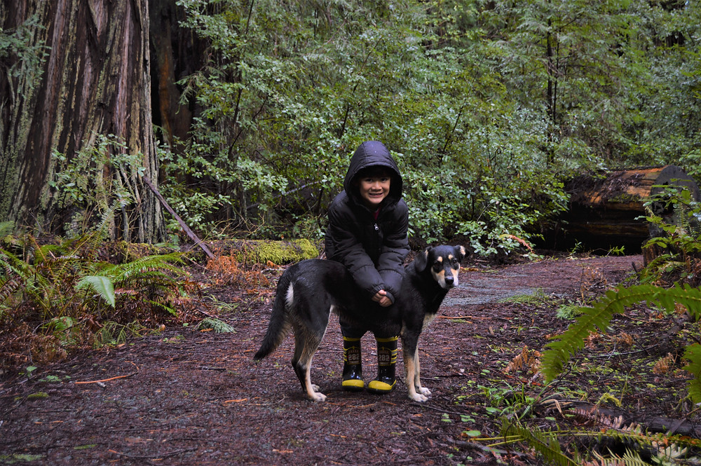 Avenue of the Giants with dog