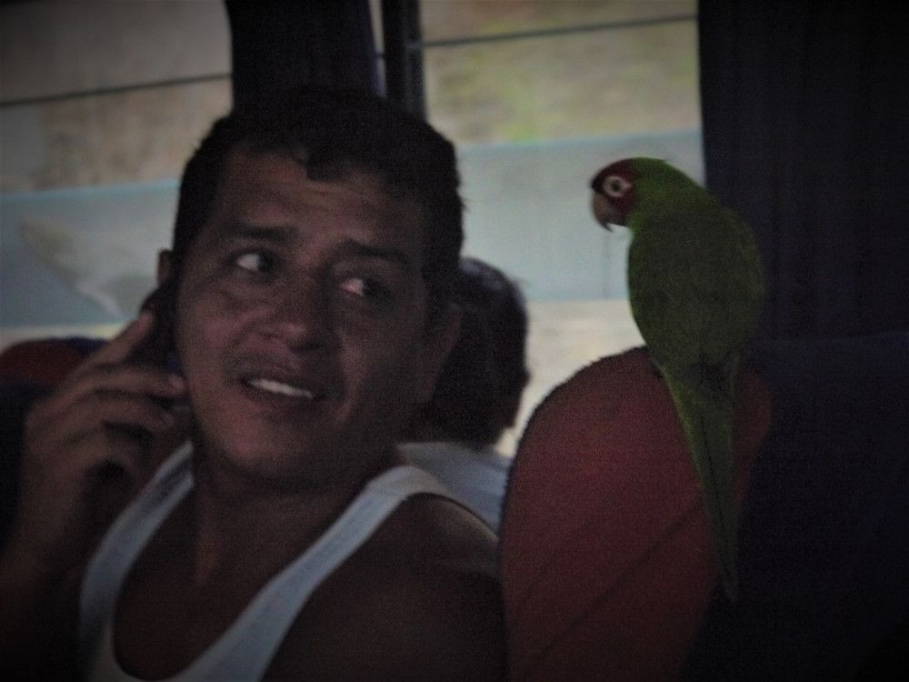 Traveling by bus Ecuador