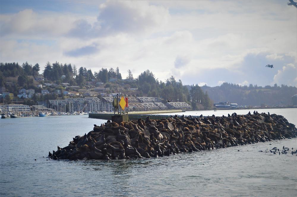 Costa Oregon Newport