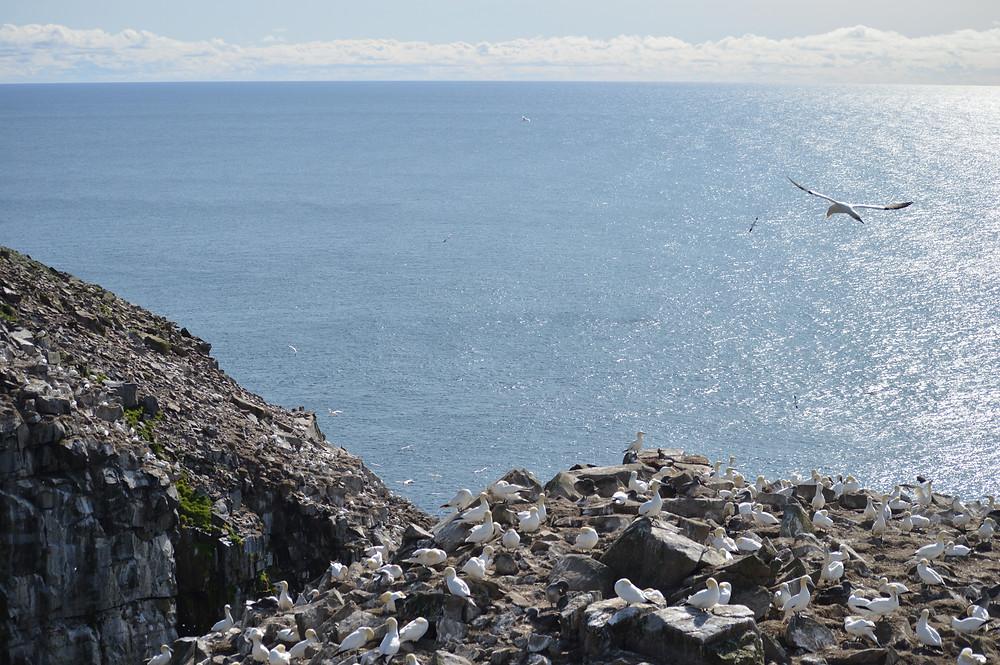 Cape St Mary Ecological Reserve Newfoundland