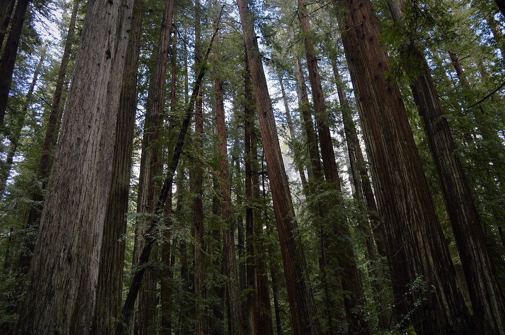 Humboldt Redwoods State Park and Redwood National and State Park