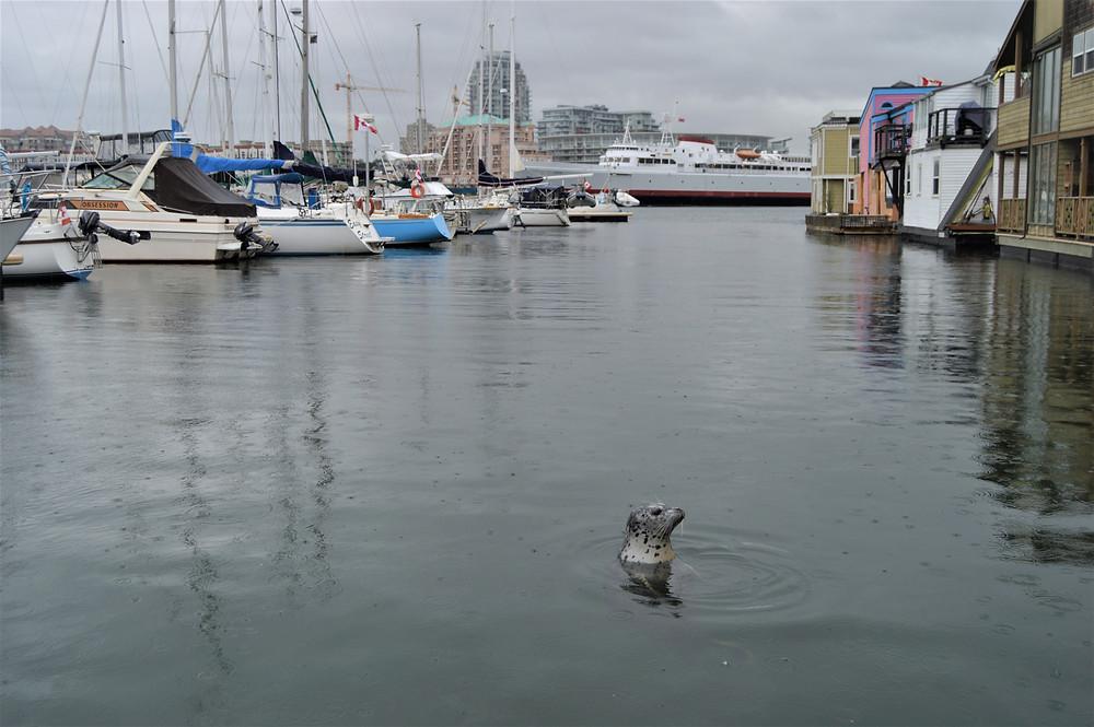 Fishermans Wharf Park