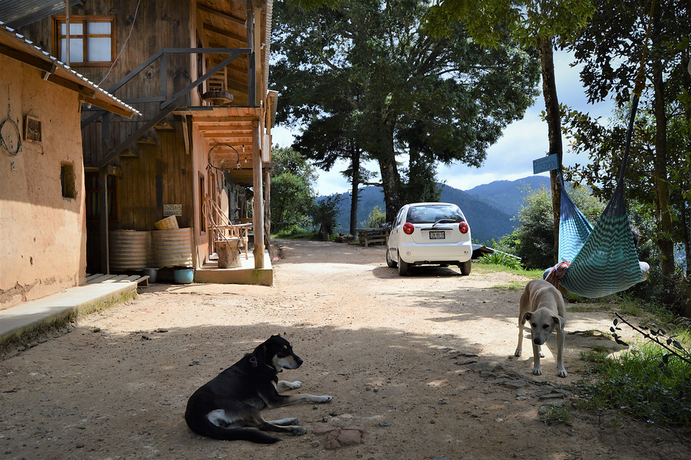 Hostel dog friendly San José del Pacifico Oaxaca