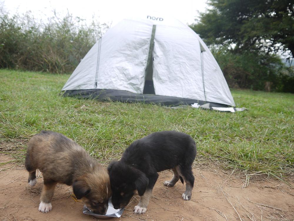 Camping Samaipata Bolivia