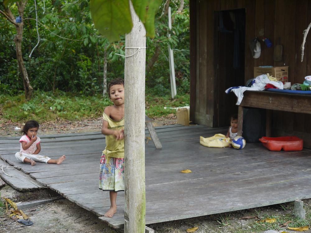 Selva Amazonas Brasil