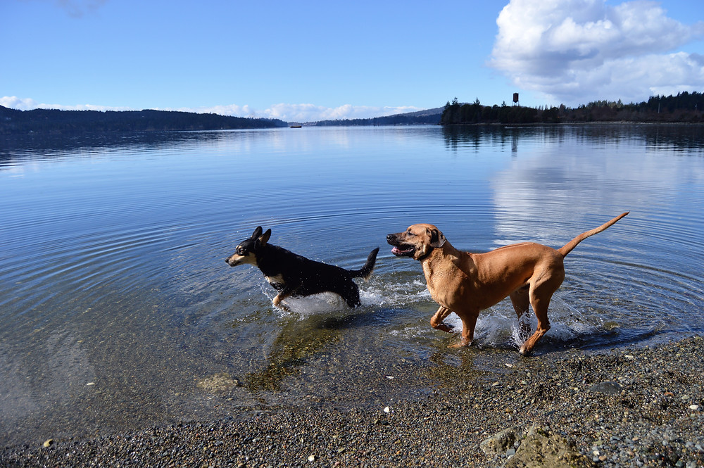 Couchsurfing Sooke Vancouver Island
