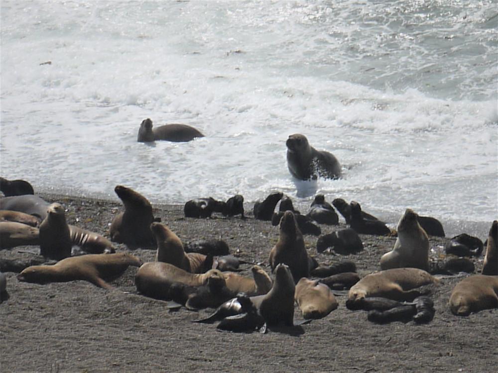 Península de Valdés sea lions