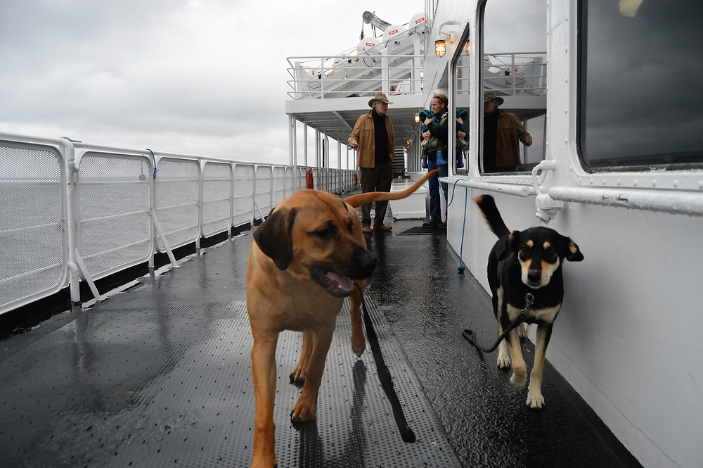 Ferry Port Angeles to Vancouver Islanddog friendly