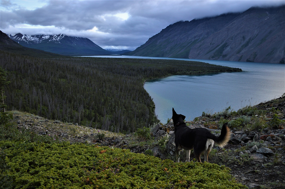 Kluane National Park Cottonwood Trail with your dog