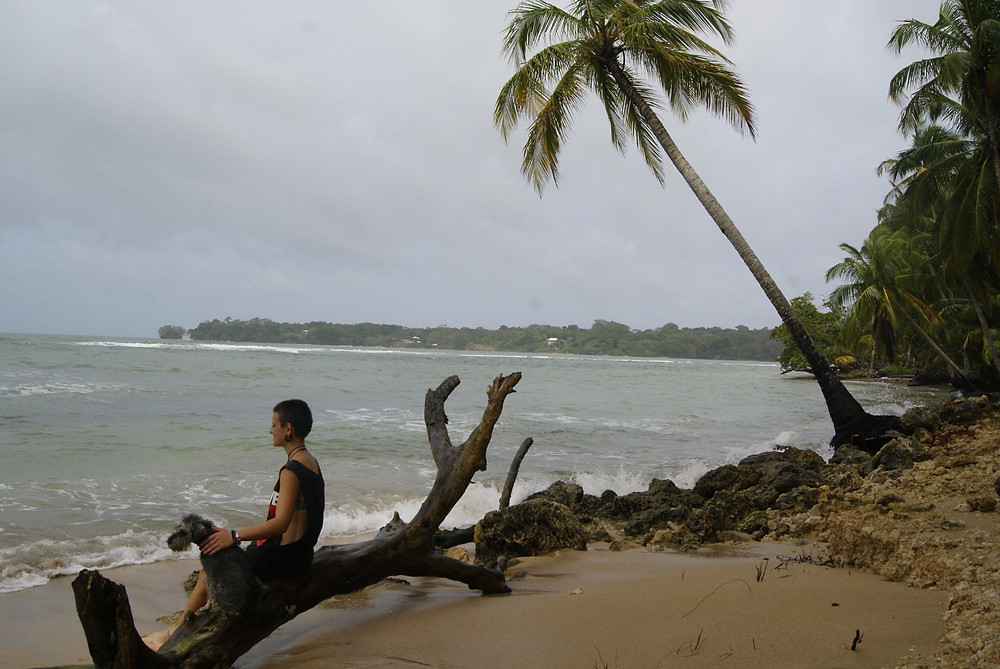 Nuska travel dog Panama