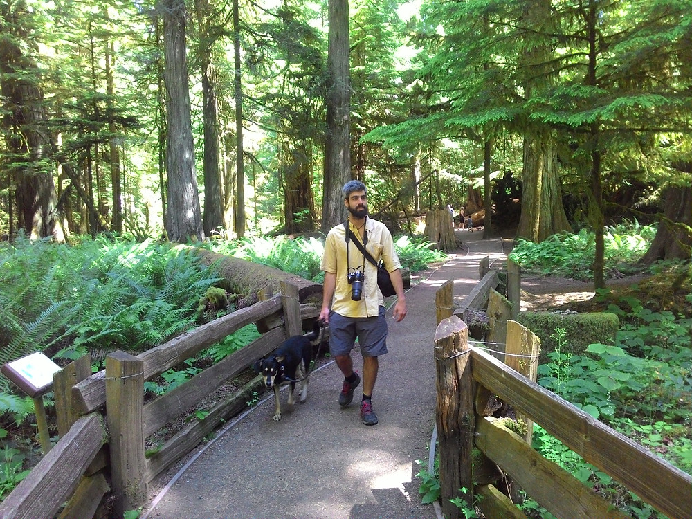 Cathedral Grove with dog