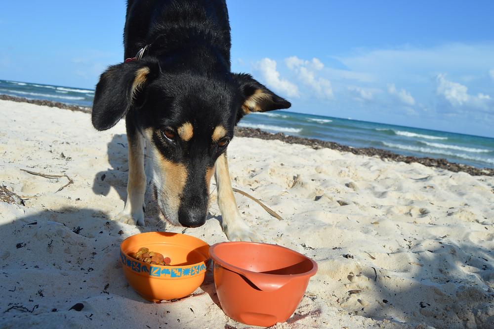 Having lunch, Playa del Carmen, Mexico