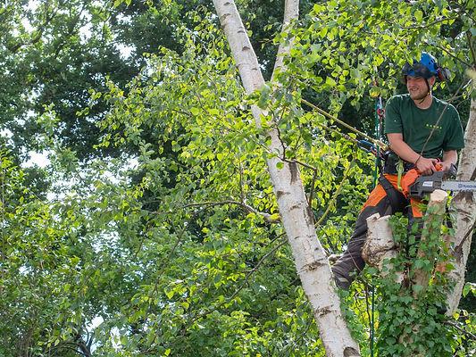 tree cutting-1-7.jpg