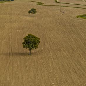 windrush-1.jpg
